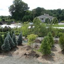 tree nursery