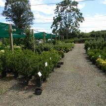 Nursery Warrenton VA