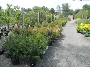 Garden Plants Warrenton VA