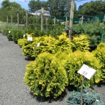 Shrub Nursery