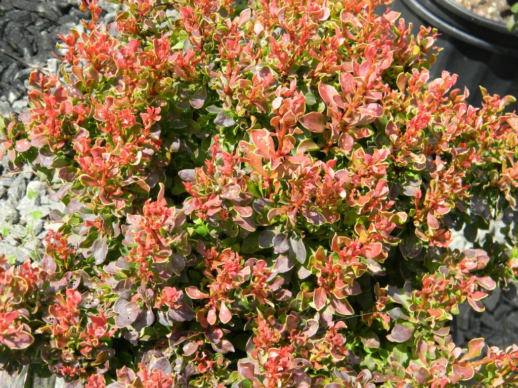 Garden Center | Plant Nursery | Fresh Produce | Annuals & Perennials