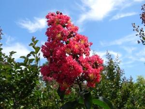 blooming shrubs