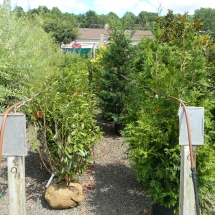 Tree and Shrub Nursery