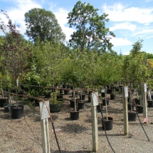 Tree and Shrub Nursery