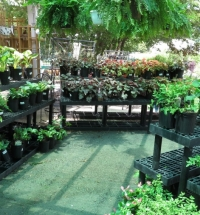Garden Center - Perennials