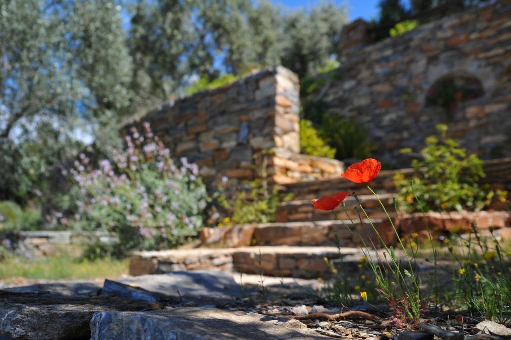 Landscape Design culpeper va
