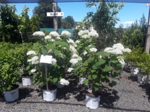 fathers day perennial sale