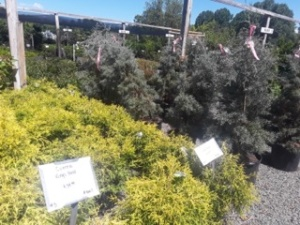 shrub sale