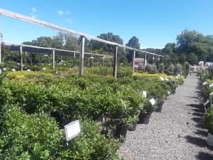 trees shrubs and perennials