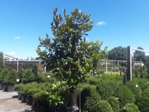 tree and shrub sale